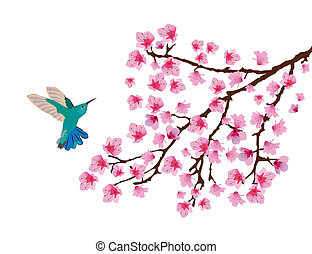 Cherry blossom - Vector hummingbird and cherry blossom