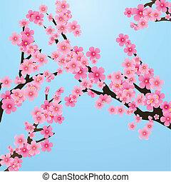 Cherry blossom, flowers of sakura, tree brunch, blue sky, spring background, vector illustration