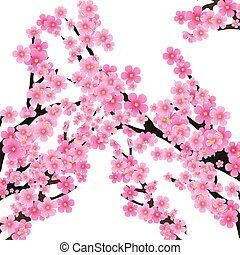 Cherry blossom, flowers of sakura, tree brunch, spring background, vector illustration