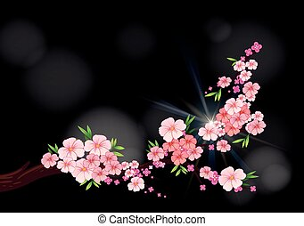 Cherry blossom flowers on branch