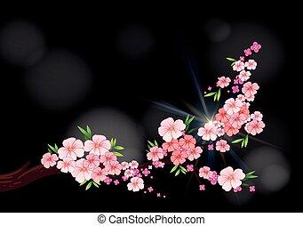 Cherry blossom flowers on branch