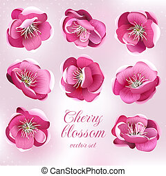 Cherry blossom flowers. Vector set.