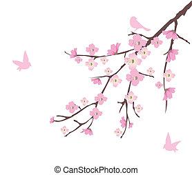 Cherry Blossom - vector cherry blossom with birds