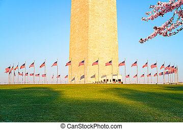 Cherry blossom near Washington Monument, USA