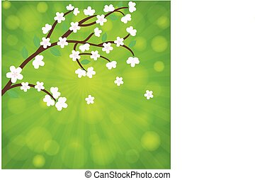 Cherry blossom, sakura branch with flowers. card vector template