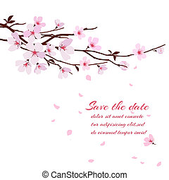 Cherry blossom, sakura branch with pink flowers. Greeting card vector template