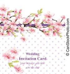 Cherry blossom. Sakura flowers background Vector