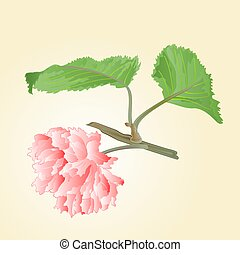 Cherry blossom twig with leaves vector