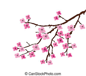 cherry blossom - vector blossom branch