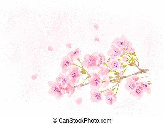 Cherry blossom watercolor illustration