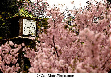 Cherry blossom with old style clock