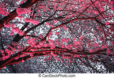 cherry blossom with red light