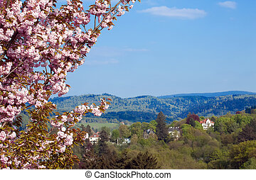 cherry blossoms against the backdrop of rural landscape
