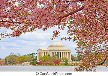Cherry Blossoms at Washington DC