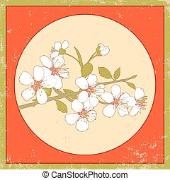 cherry blossoms - Flowers of the cherry blossoms on a...