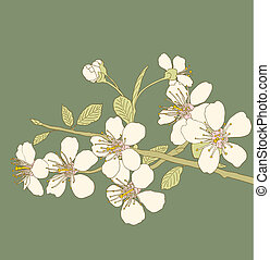 Cherry blossoms - Flowers of the cherry blossoms on a green...
