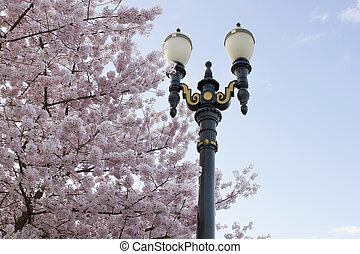 Cherry Blossoms Lamp Post Against Blue Sky