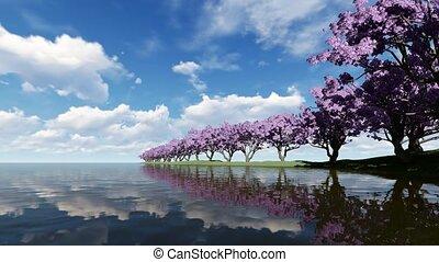 Cherry blossoms on a cherry tree near shore river 4k