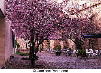 Cherry blossoms with flower