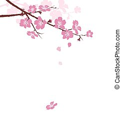 Cherry branch with flowers isolated on white