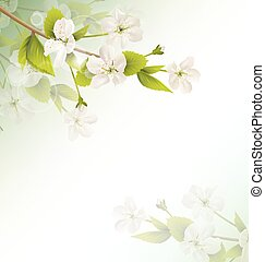 Cherry branch with white flowers on green