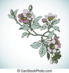 Cherry branches with flowers, sakura vector illustration