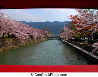 Cherry channel - A spring channel in kyoto city during the...