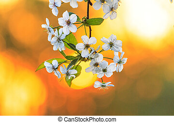 cherry flowers in warm colors
