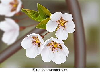 Cherry flowers Vector realistic branches. Spring blossom. Holiday cards