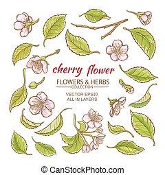 cherry flowers vector set