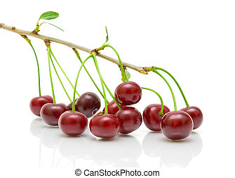 cherry fruit on the branch on a white background