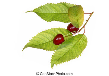 Cherry fruit with leaf, isolated on white.