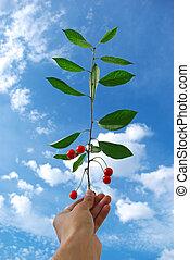 Cherry in hand
