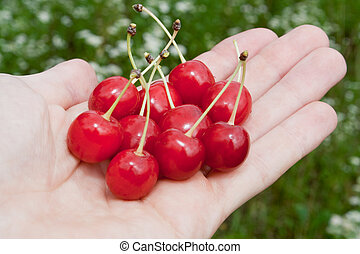 cherry is in the hand