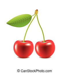 Cherry isolated on white vector