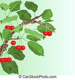 Cherry old branch