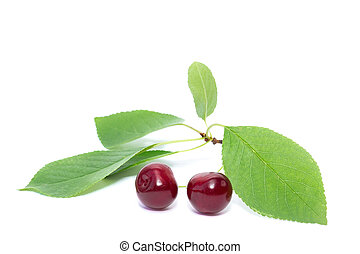 Cherry on a white background.