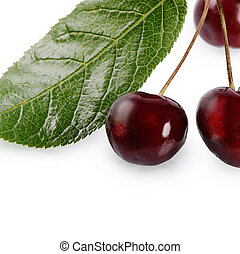 Cherry on the branch with leaves