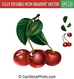 Cherry on white background. Vector illustration