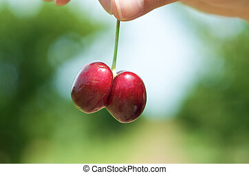 Cherry picking in the nature