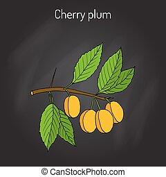 Cherry plum Prunus cerasifera branch with fruits. Hand drawn...