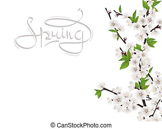 Cherry spring branch with white flowers