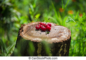 Cherry stay on a stump in the grass