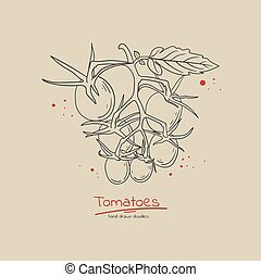 Cherry tomato branch hand drawn doodle style concept illustration for label. poster, flyer, sale banner. Fresh organic food.