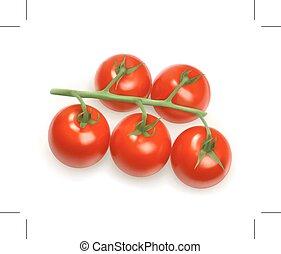 Cherry tomatoes illustration