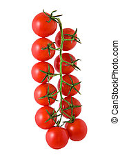 Cherry tomatoes on vine. Isolated on white