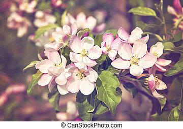 Cherry tree blossom flowers