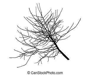 Cherry tree branch silhouette. Vector illustration.