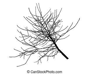 Cherry tree branch silhouette. Vector illustration.