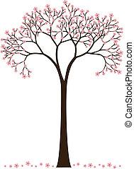 cherry blossom, flowering spring tree, vector